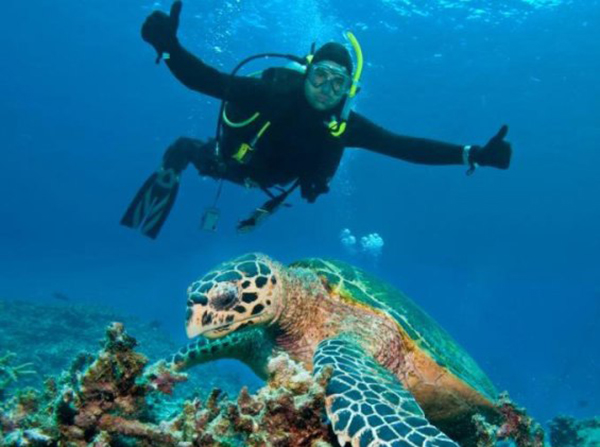 Changes to safety standards recommended for recreational diving industry in Queensland