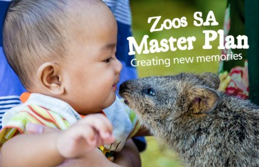 Zoos SA releases plans for new wildlife experiences at Adelaide and Monarto Zoos