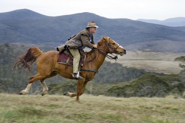 Conservationists outraged at horse riding trial in NSW wilderness areas