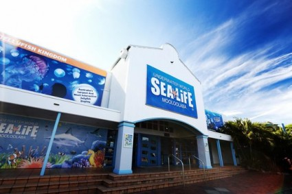 Jellyfish exhibit unveiled as part of $6.5 million refurbishment at UnderWater World Mooloolaba