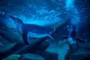 Zoo and Aquariums Association provides updates on facility updates and upgrades in 2020