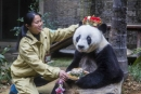 World's oldest panda dies at age 37