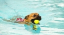 Hamilton Waterworld to host second Paws in the Pool event