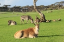 Zoos South Australia selects Gateway/VTicket access solution