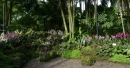 Singapore's National Orchid Garden to benefit from major makeover