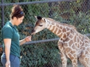 Perth Zoo wins national disability access award