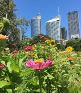 Wildflower Meadow Pops Up In The Heart Of Sydney